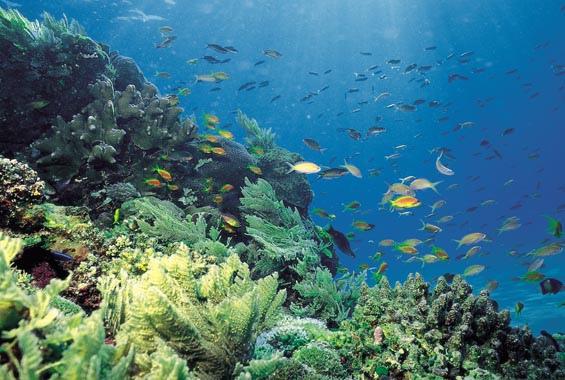 Diving: Mafia Island Tanzania