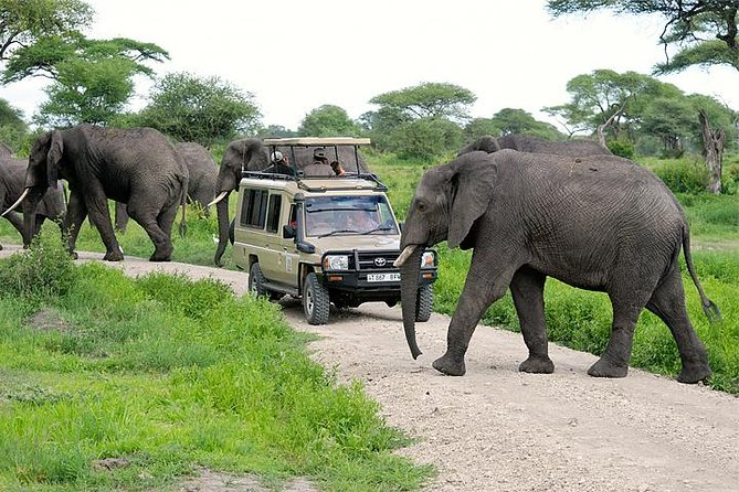Game Drive in Arusha National Park Tanzania