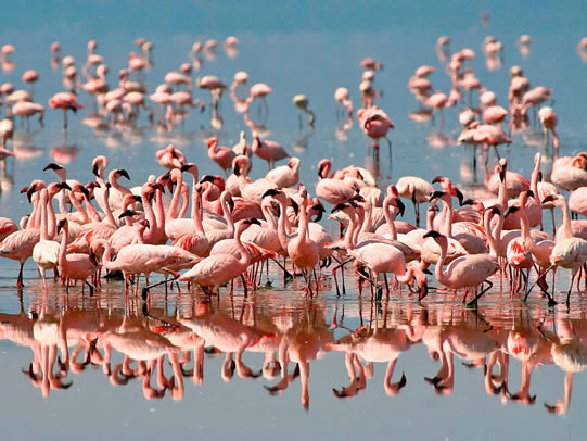 Flamingos - Lake Manyara National Park Tanzania