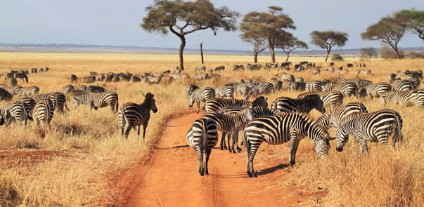 Game Viewing in Tarangire National Park - Tanzania