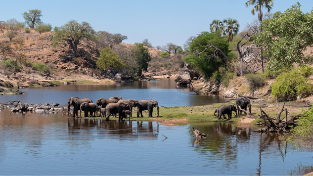 Elephants in Ruaha National Park