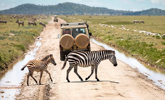Safari in Serengeti National Park Tanzania