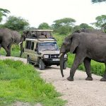 Game Drive in Tarangire National park Tanzania